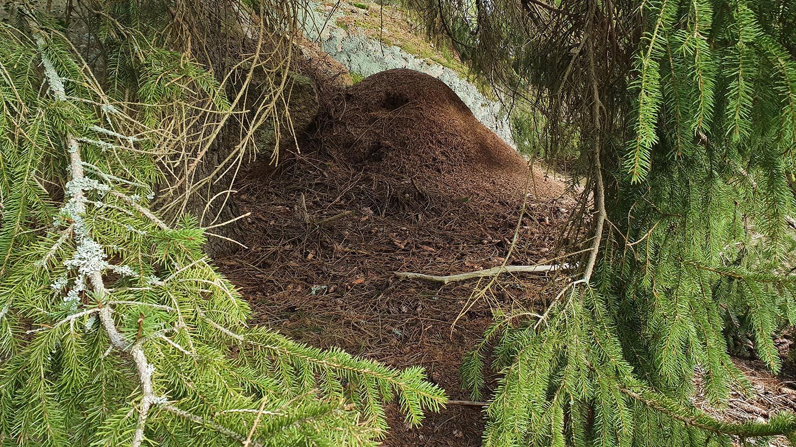 Moose Poop Messenger Renja Leino 1