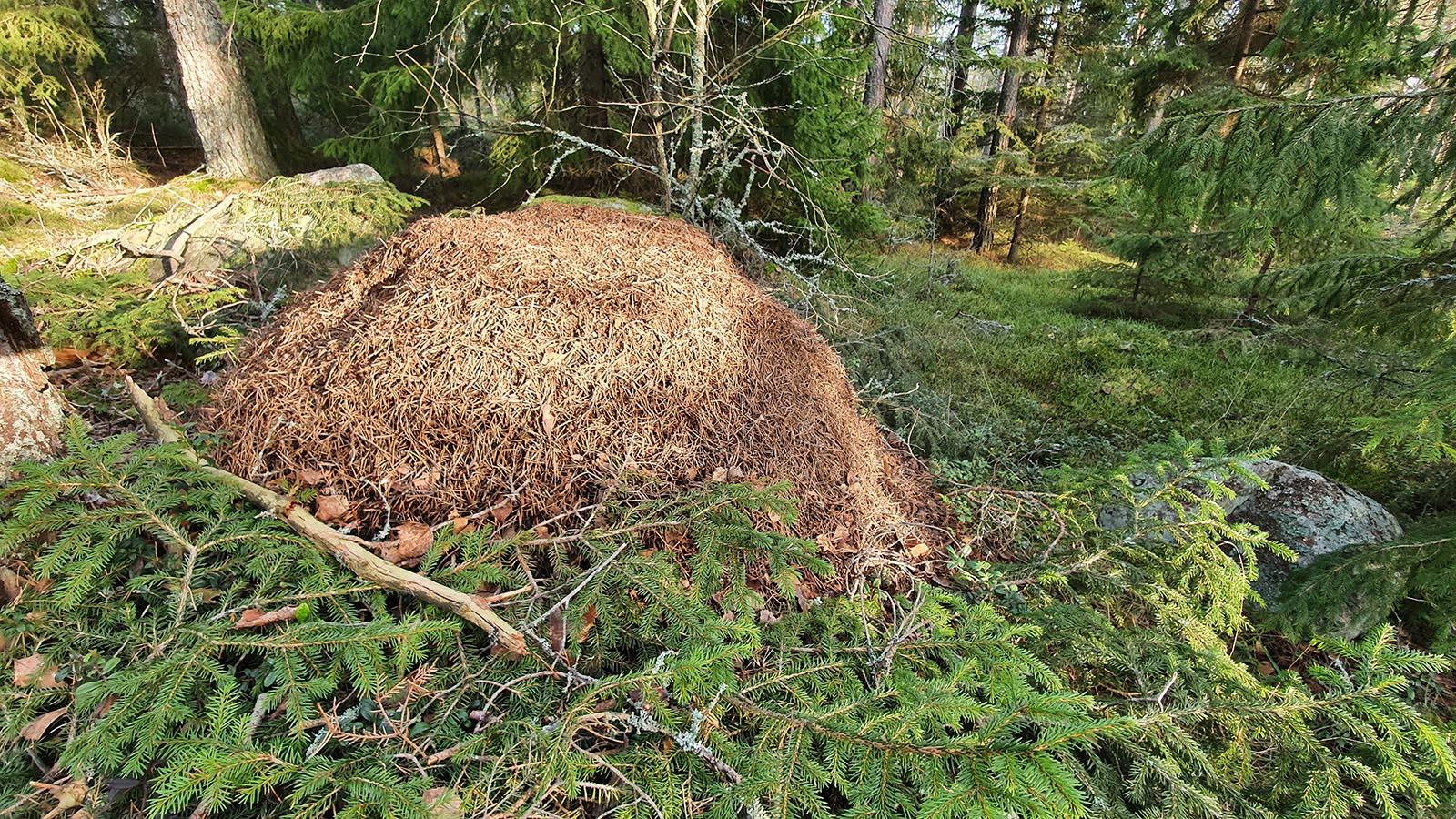 Moose Poop Messenger Renja Leino 4