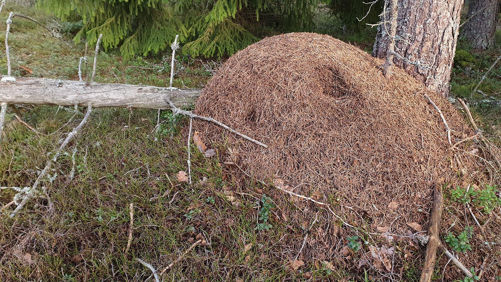 Moose Poop Messenger Renja Leino 5